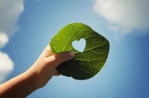 Auf dem Weg zu einer ausgeglichenen CO2 Bilanz
