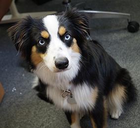 Lucy ist der Bürohund bei DieFeinschmecker