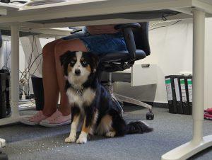 Bürohund Lucy